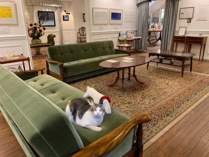 北鎌倉 葉祥明美術館のソファでくつろぐ猫のえむくん