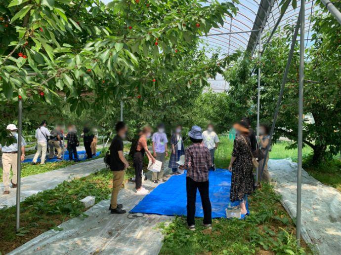 福島市の自治体婚活が行った婚活イベント「さくらんぼ婚」の様子