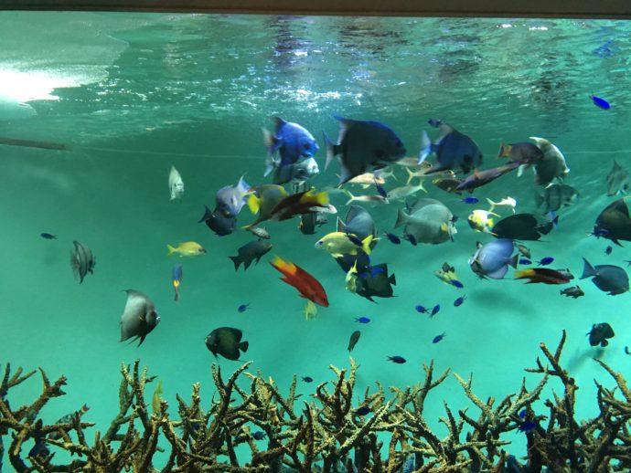 ナビスタの水族館めぐりイベント
