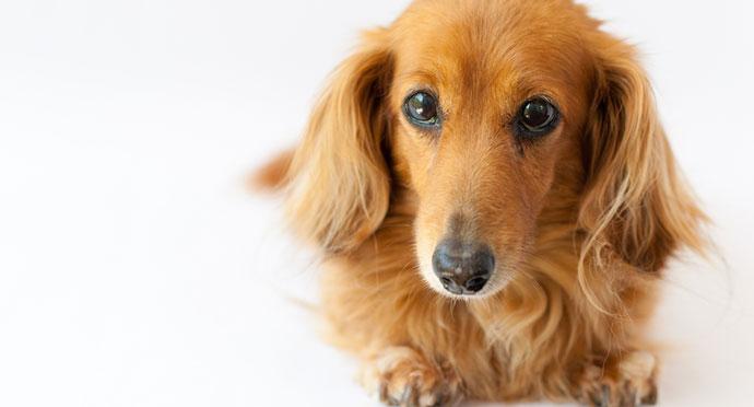 婚活パーティーで出会ったマザコン男が連れていた犬