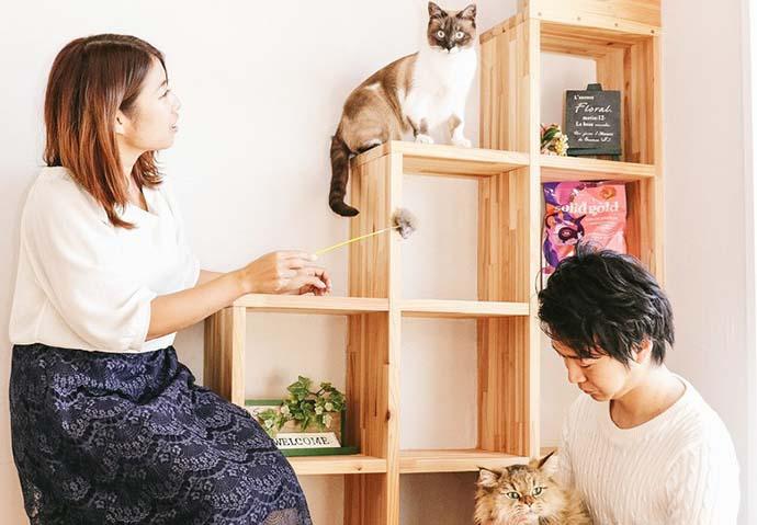 ねこ好き必見猫カフェでの婚活イベント情報まとめ!