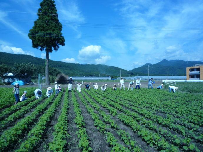 農業専門の婚活サイトRaitaiの安全対策について